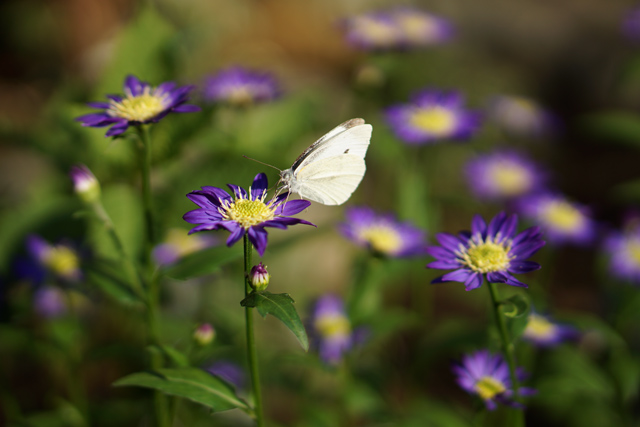 E18200 花と蝶
